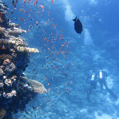 divers-underwater-ocean-swim-68767_-min (1)